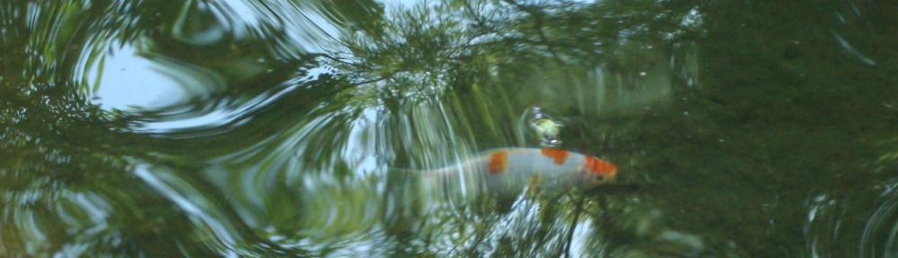 cropped-Goldfish-cropped.jpg